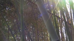 spring breeze bamboo