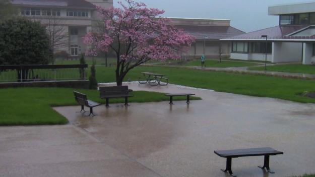 rain on campus 2