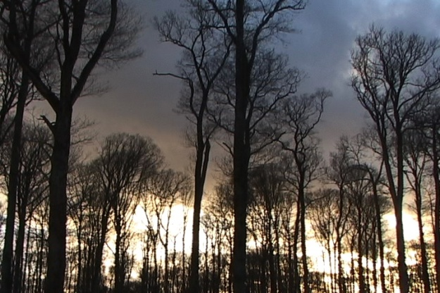 france 2015 n trees 011816;06